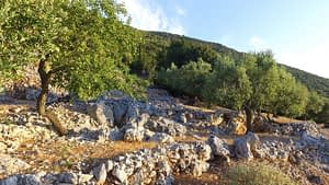 Landscape and terrain of land for sale on Ithaca Greece, Stavros