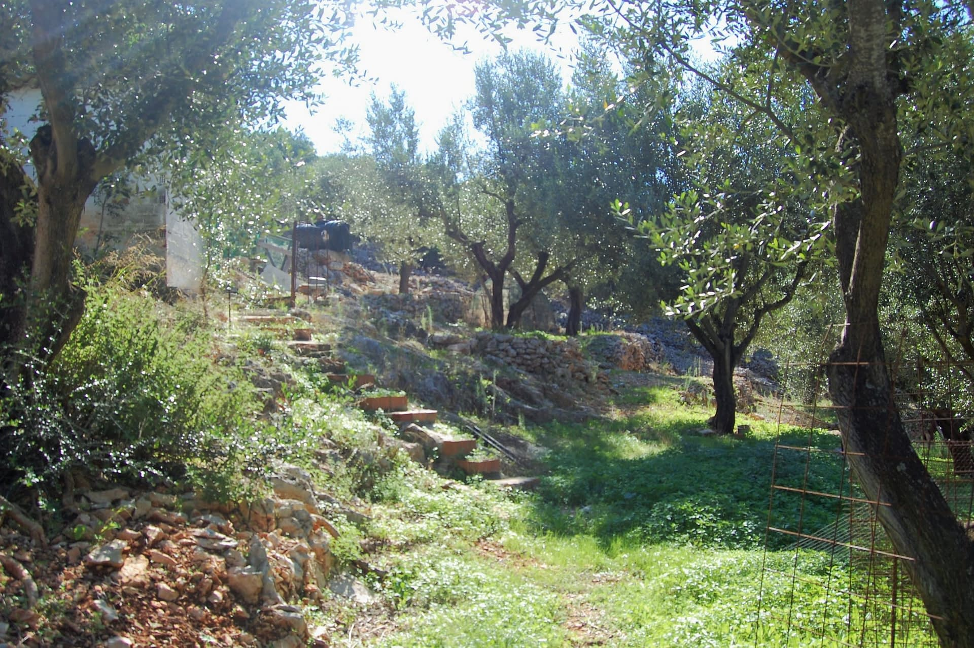 Garden of house for sale in Ithaca Greece, Perachori