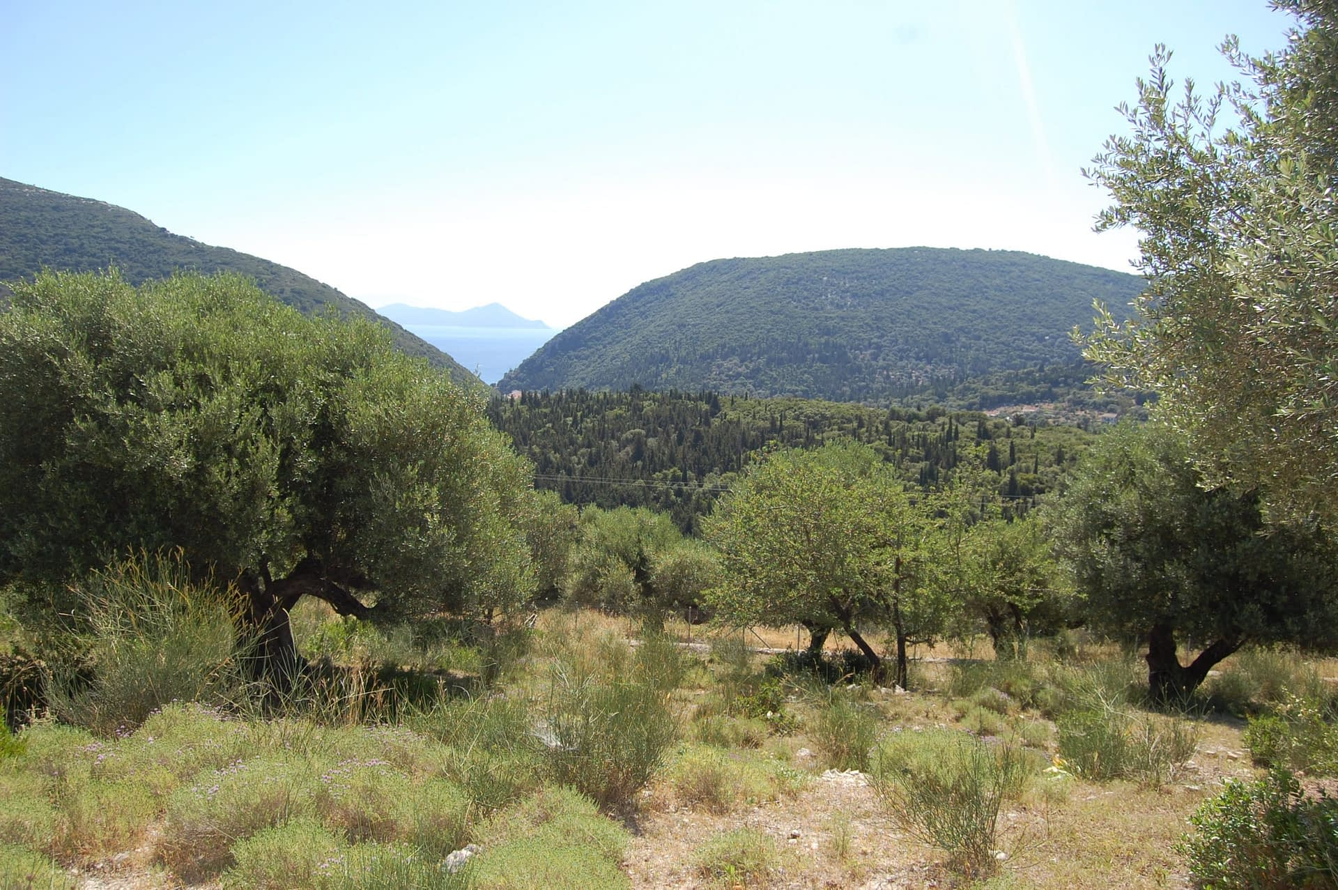 Landscape view and terrain of property for sale in Ithaca Greece Pilikata