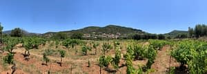 Vineyard and landscape of land for sale on Ithaca Greece, Vathi