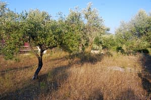 Terraced landscape of house for sale in Ithaca Greece, Kolleri