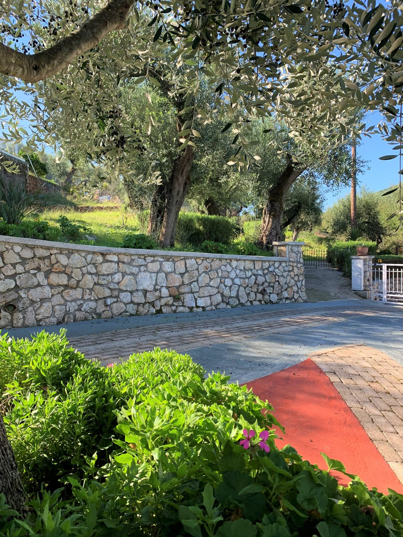 Stone terrace and garden of holiday house for rent in Ithaca Greece, Frikes