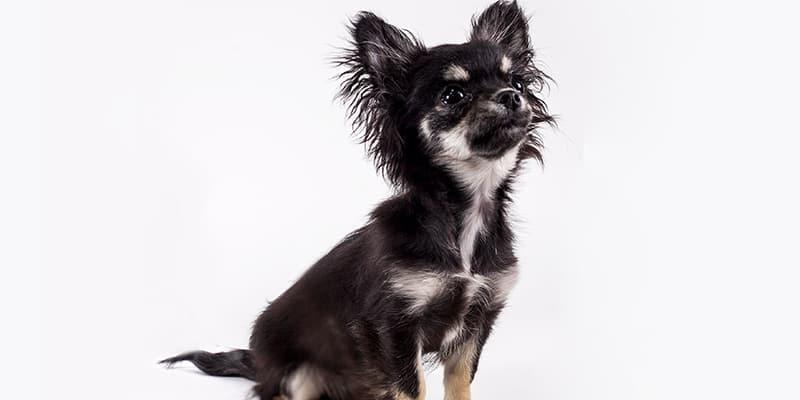 lola-dog